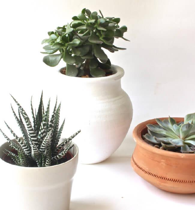succulents-feature